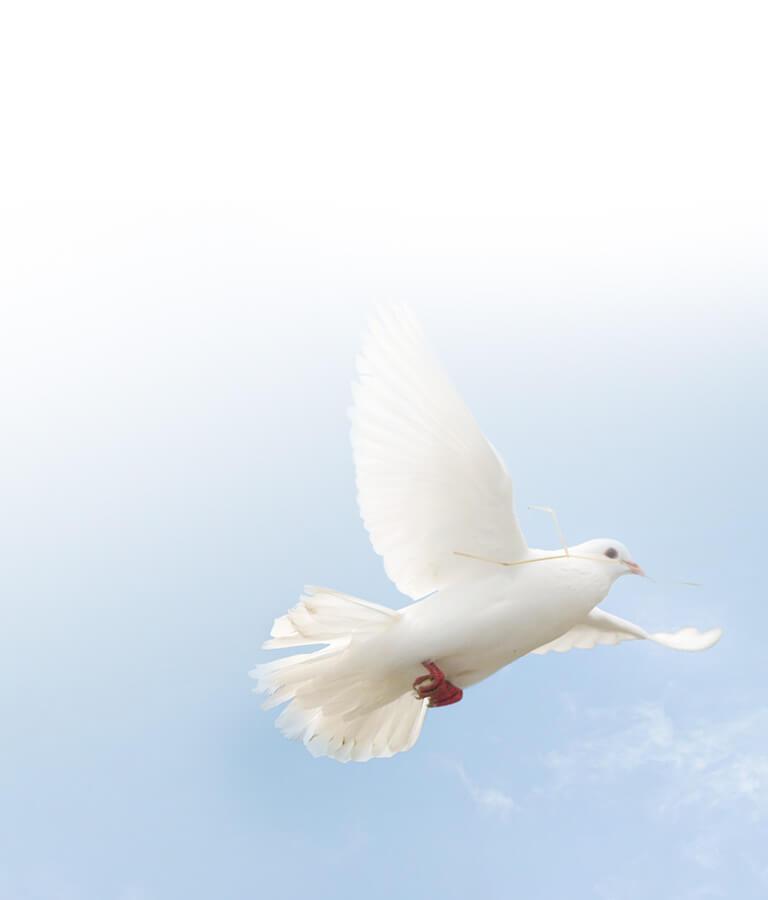 SDG about Peace